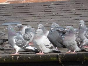 Bird-Control-Pest-Control.jpg