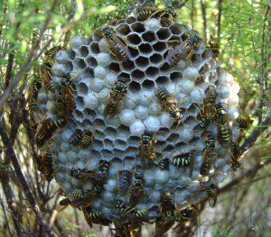 Wasp-Pest-Control.jpg